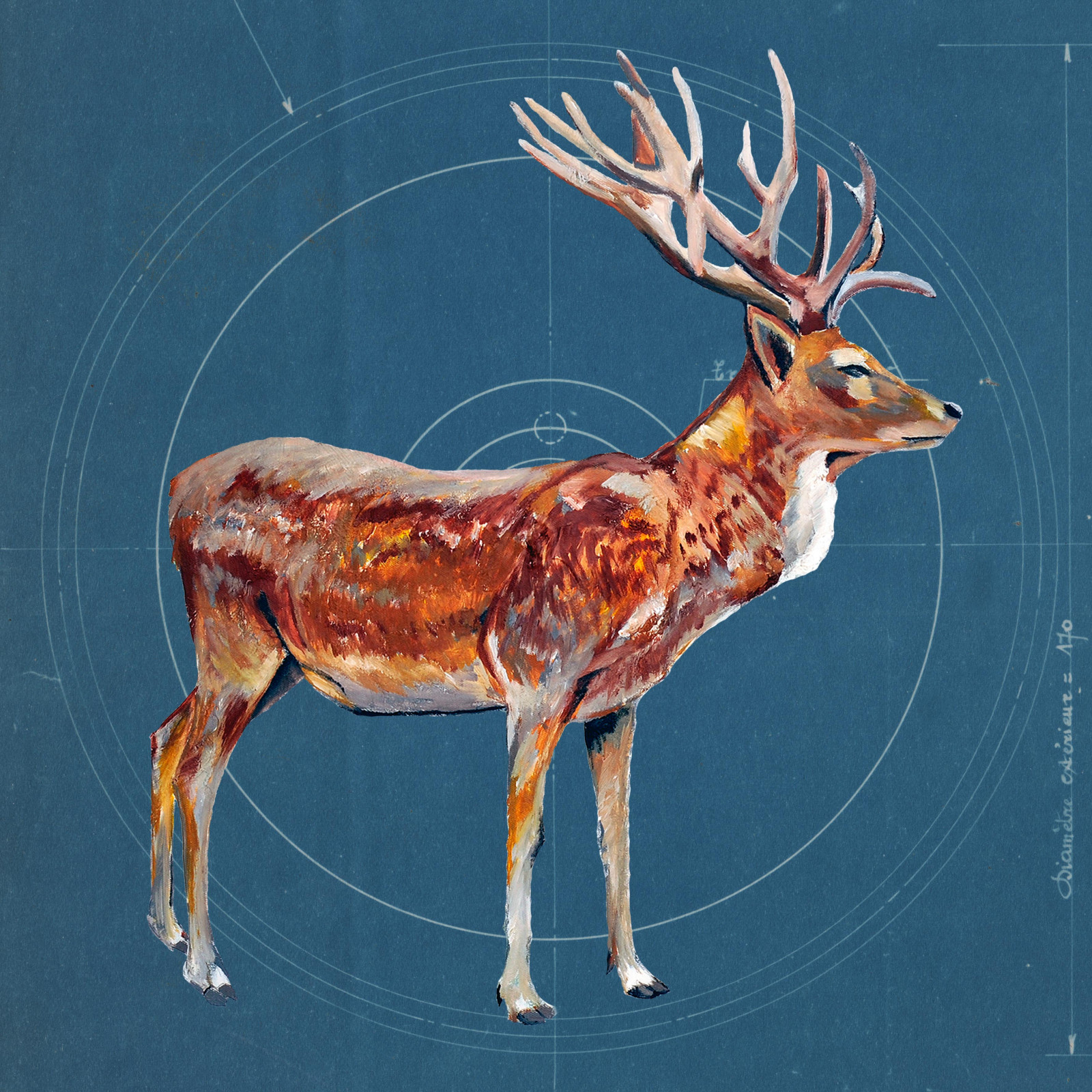 Stag on blueprint ltd edition print degreeart the original stag on blueprint ltd edition print degreeart the original online art gallery malvernweather Image collections